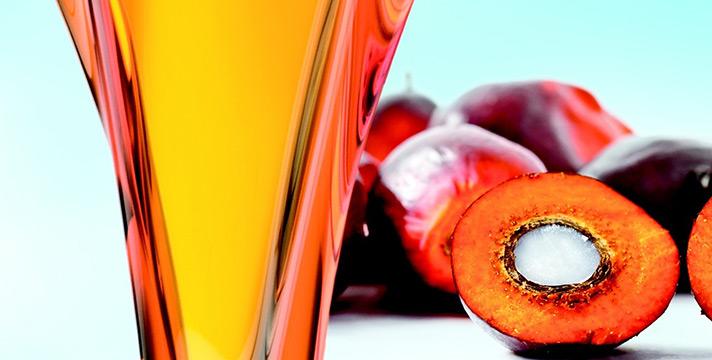 Olio di palma caratteristiche nutrizionali utilizzo conseguenze per la salute evidenze scientifiche