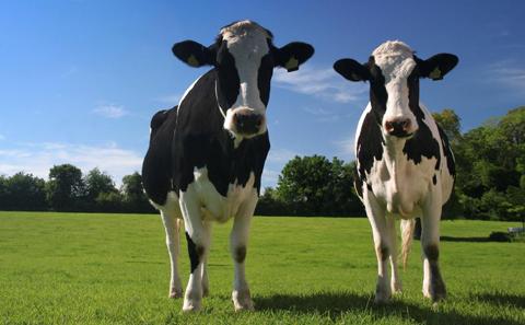 Consumo di carne e tumori: esiste un legame?