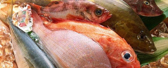 Pesce, mercurio, diossini: i reali rischi e i benefici del consumo di pesce