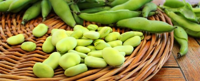 Le proprietà nutritive delle fave, il favismo, il contenuto di L-Dopa e l'utilizzo in cucina