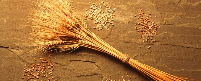 Sensibilità al glutine non celiaca, sintomi, diagnosi, trattamento e cura