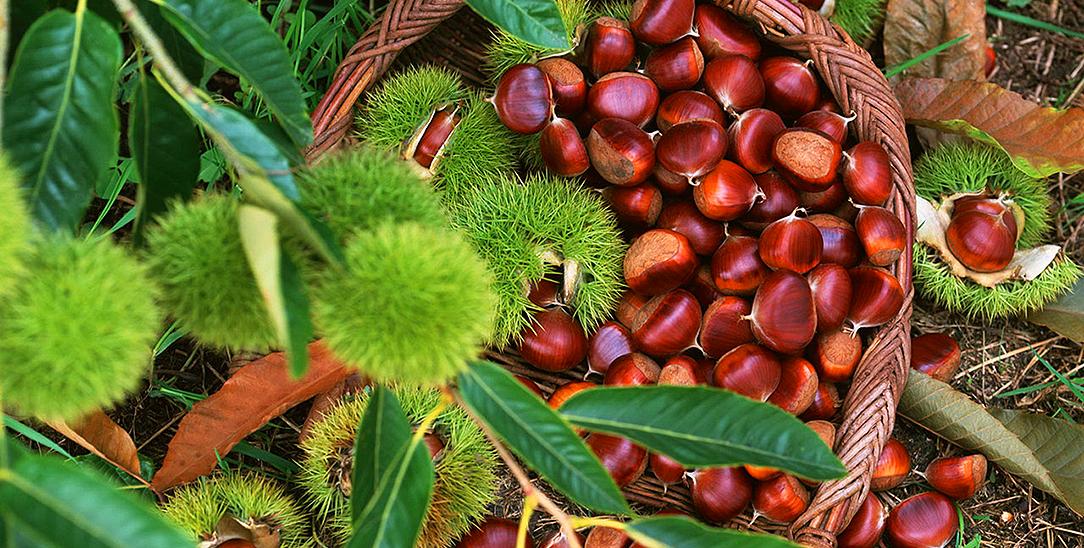Le proprietà nutiritive delle castagne, uso in cucina e ricette