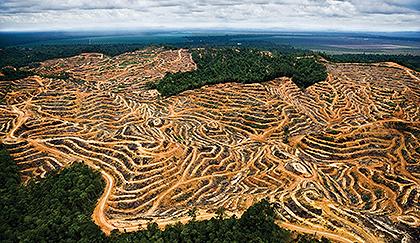 """Alimentazione """"senza"""" e difesa dell'ambiente"""