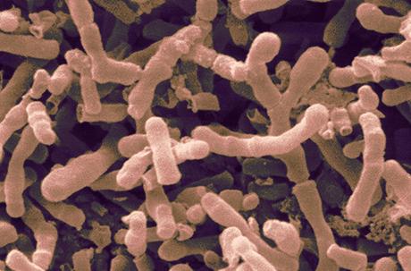 Il ruolo del microbiota nell'obesità, nelle malattie neurodegenerative e enll'autismo