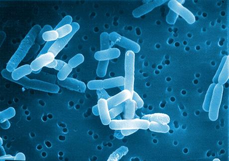 Il microbiota umano, specie e famiglie, varietà relazione con salute e patologie