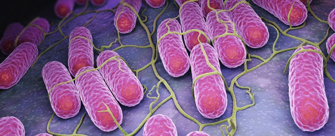 Microbioma, il ruolo su salute, longevità e malattia, l'influenza di dieta, probiotici e stress