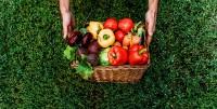Pestici e cancro, il test di Ames , il ruolo dei micronutrienti