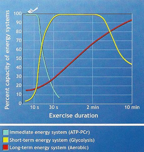 Sistemi energetici cellule muscolare e alimentazione per lo sport: fosfocreatina, glicogeno, lipidi