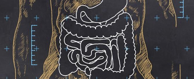Transito intestinale, i tempi e i fattori che regolano il passaggiodel cibo nello stomaco e nell'intestino