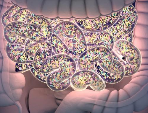 Disbiosi intestinale: cosa è, i rischi per la salute