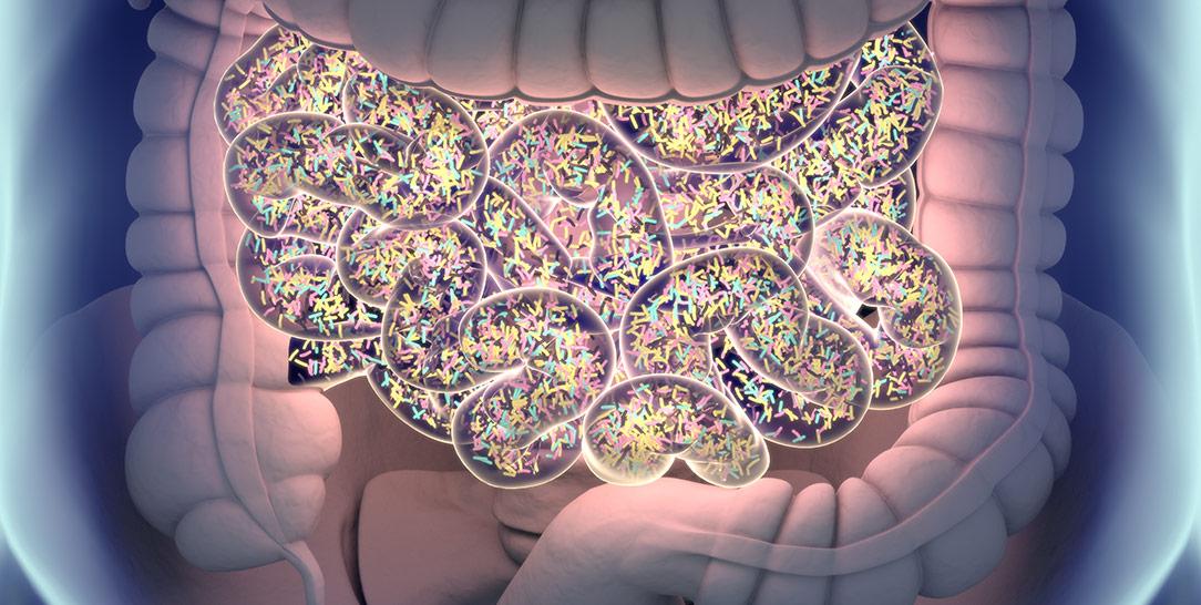 Cosa è la disbiosi intestinale, quali sono le conseguenze per la salute, quali sono le malattie associate e i trattamenti utilizzati