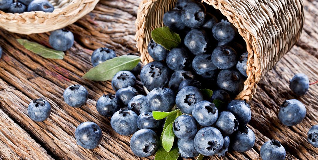 Le proprietà nutritive dei mirtilli, i valori nutrizionali e i benefici per la salute del mirtillo nero europeo e del mirtillo americano