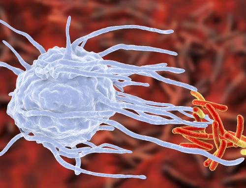 Dieta e sistema immunitario