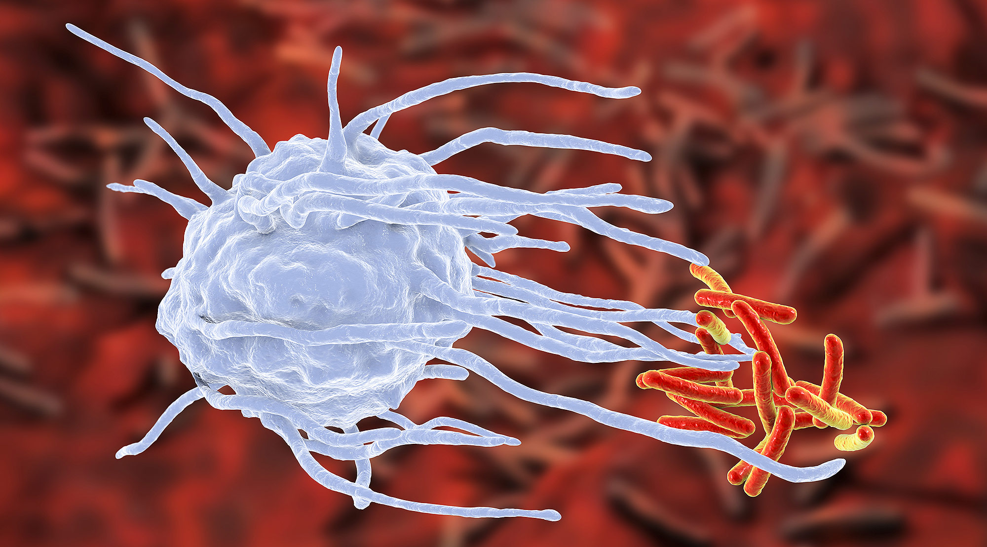 Dieta e sistema immunitario, i nutrienti per difese immunitarie efficienti