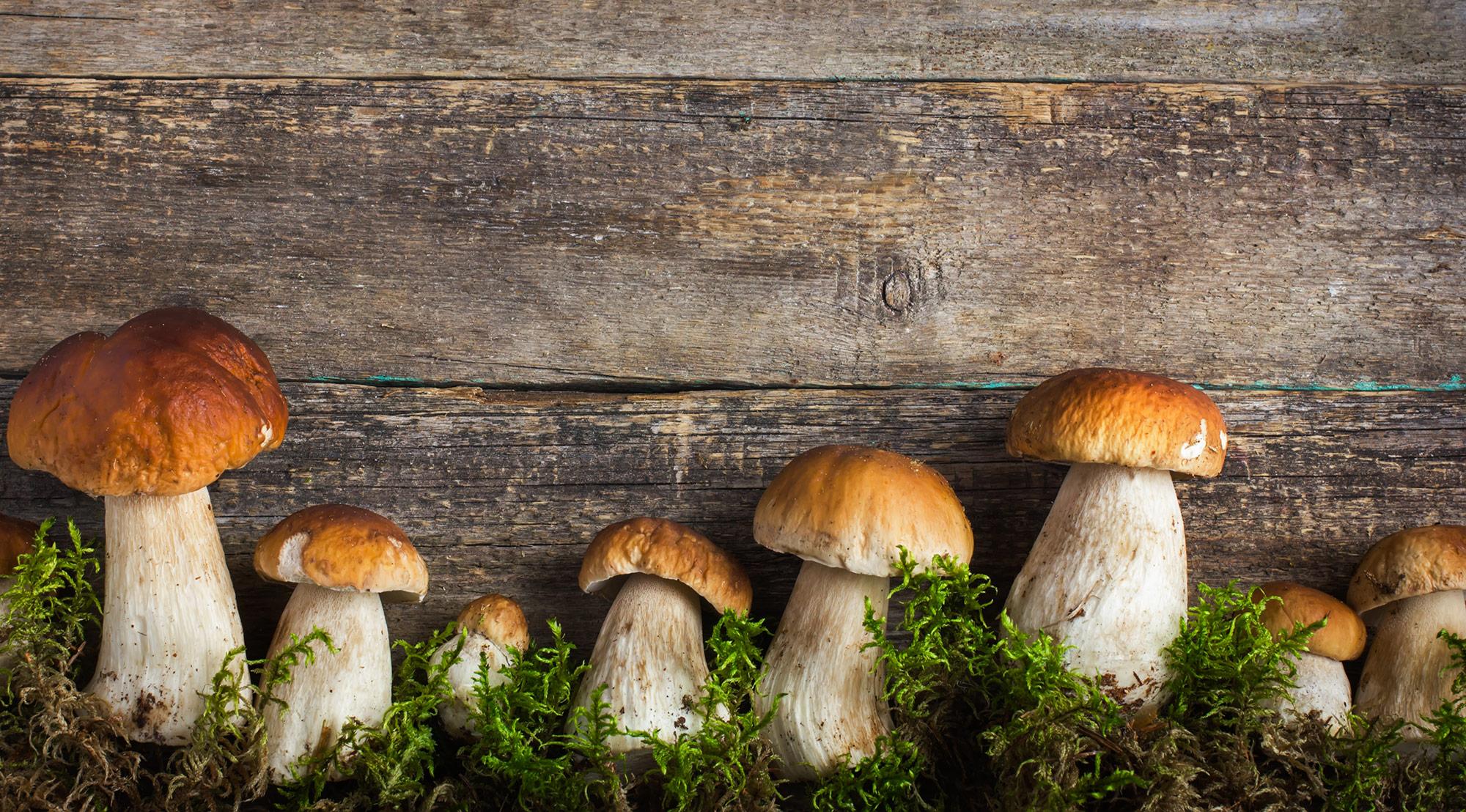 Le proprietà nutritive dei funghi, i valori nutrizionali, i benefici per la salute, i funghi velenosi