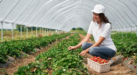 Benefici per la salute delle fragole, proprietà nutritive